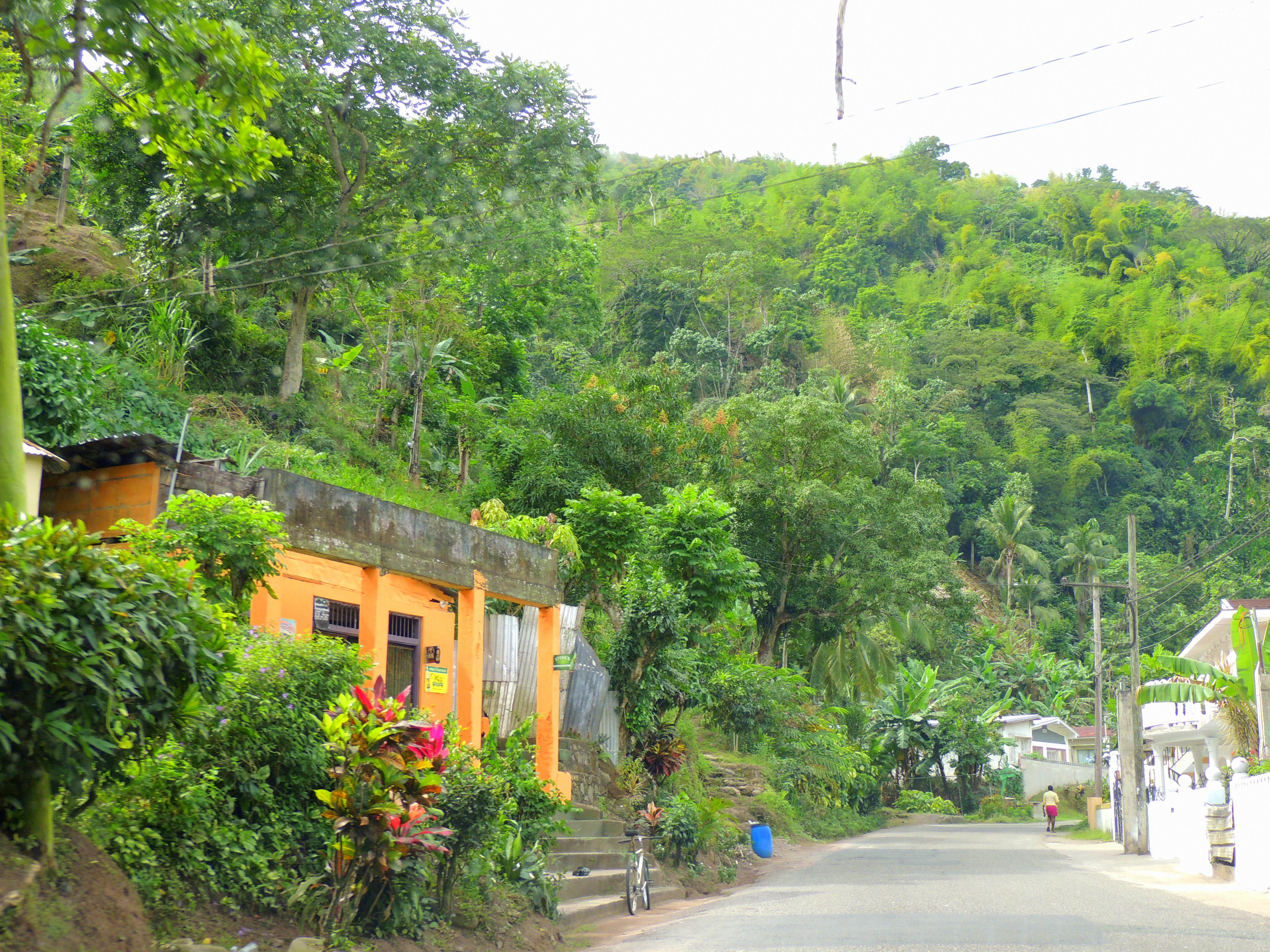Jamaica road