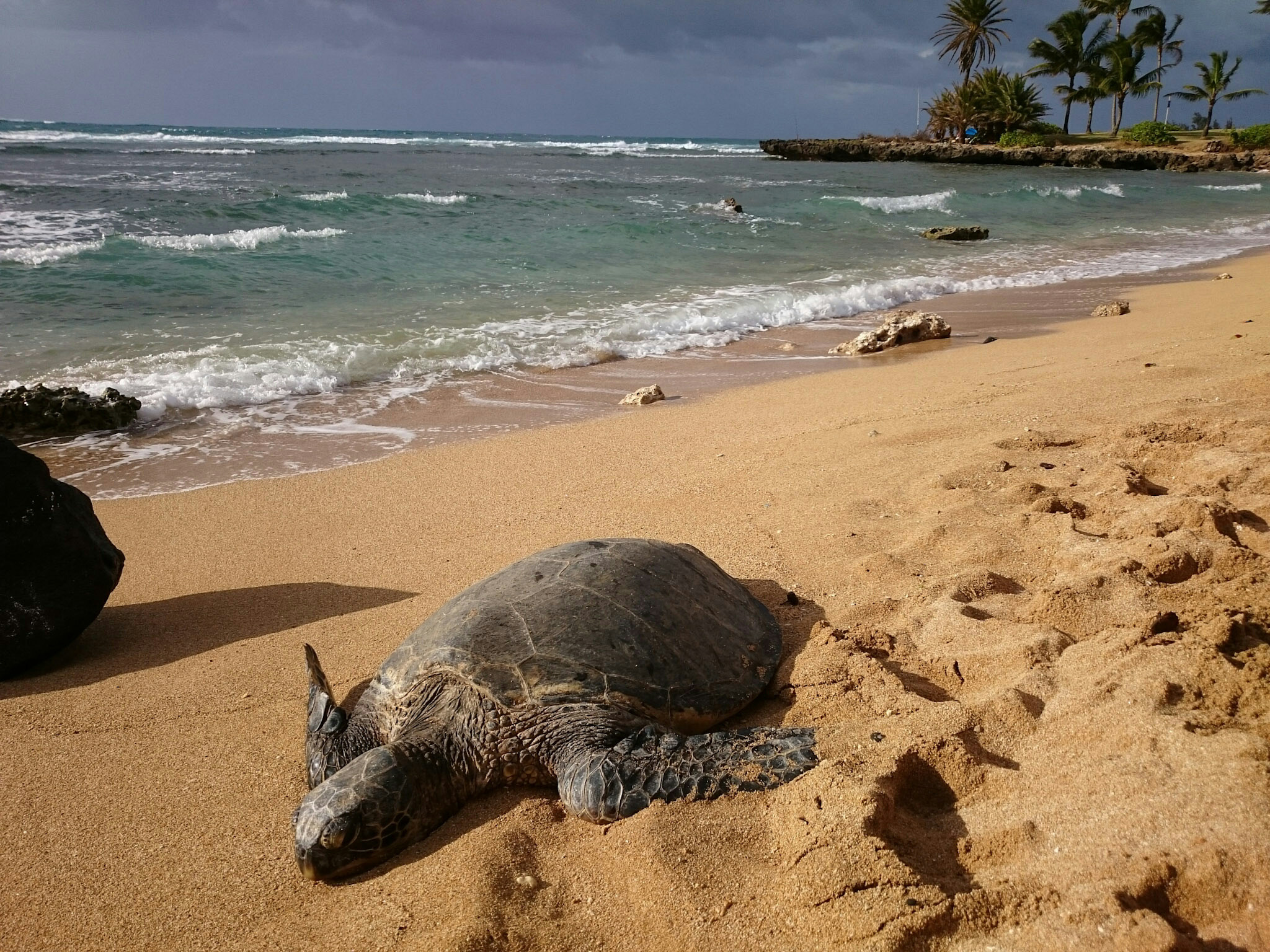 Sunbathing on Haleiwa Ali'i beach
