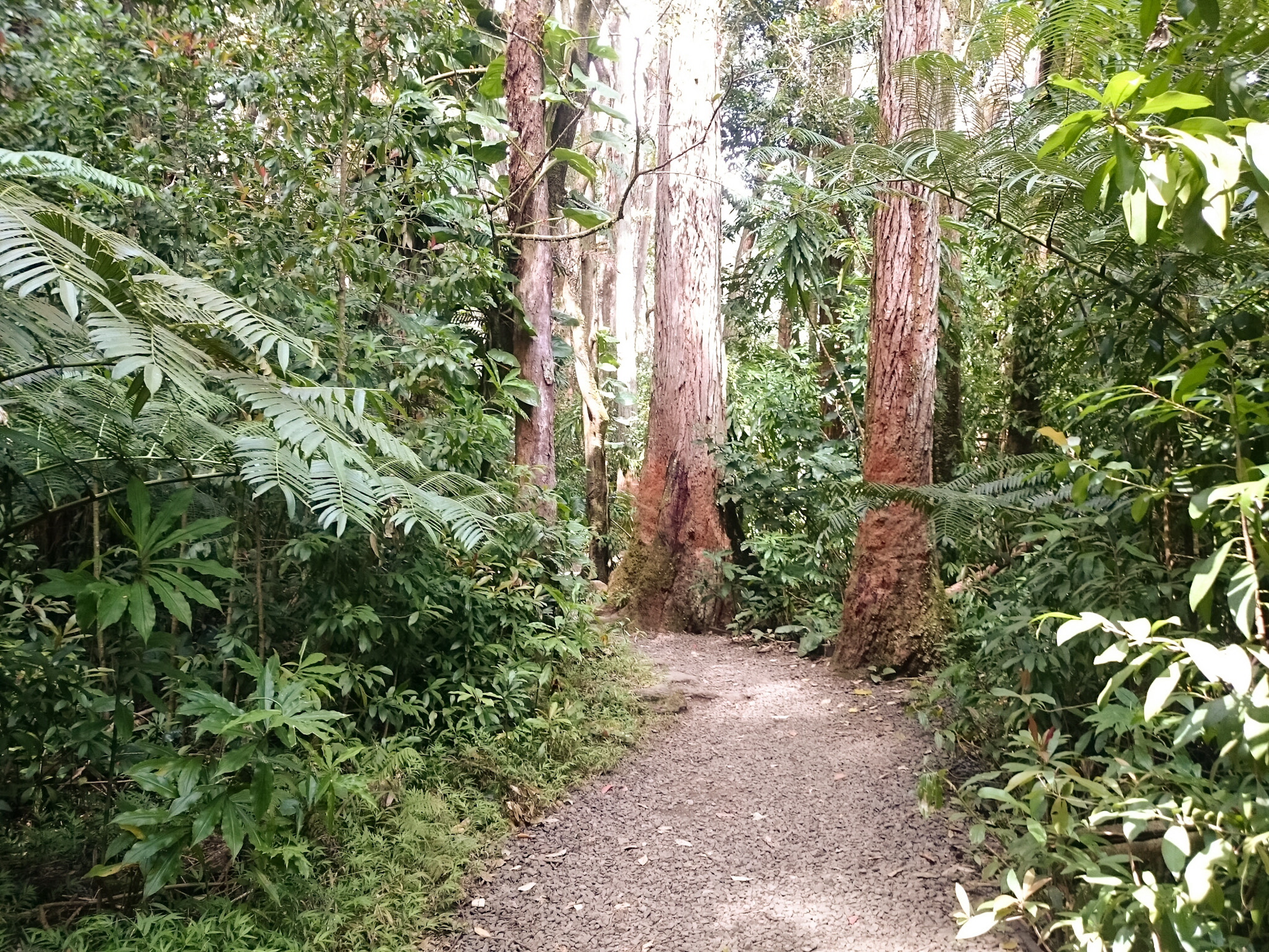 Walk to the Manoa Falls