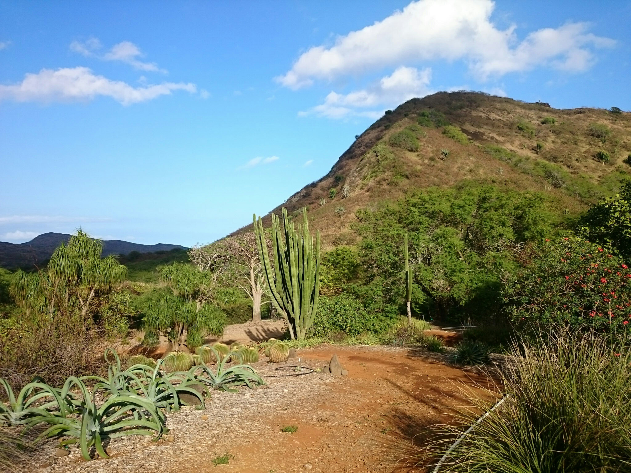 Jardin botanique de Koko crater