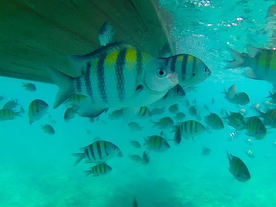 Snorkelling in Koh Phi Phi