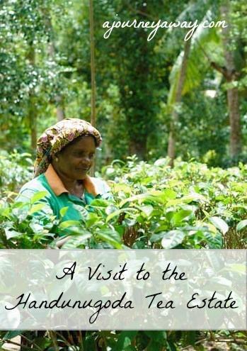 A visit to the Handunugoda tea estate, Sri Lanka