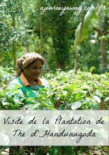 Visite de la plantation de thé Handunugoda, Sri Lanka