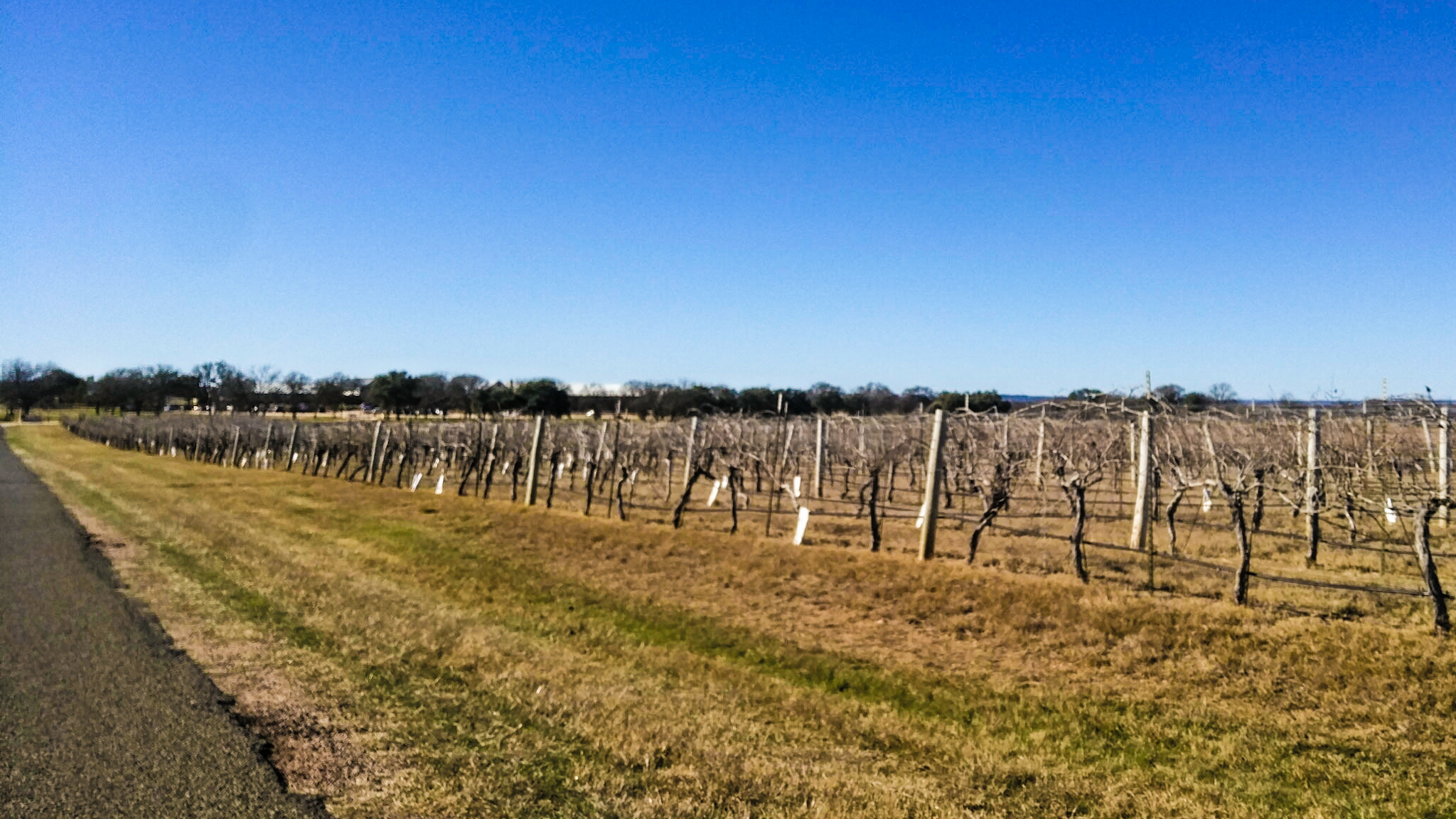 Vineyards around Fredericksburg
