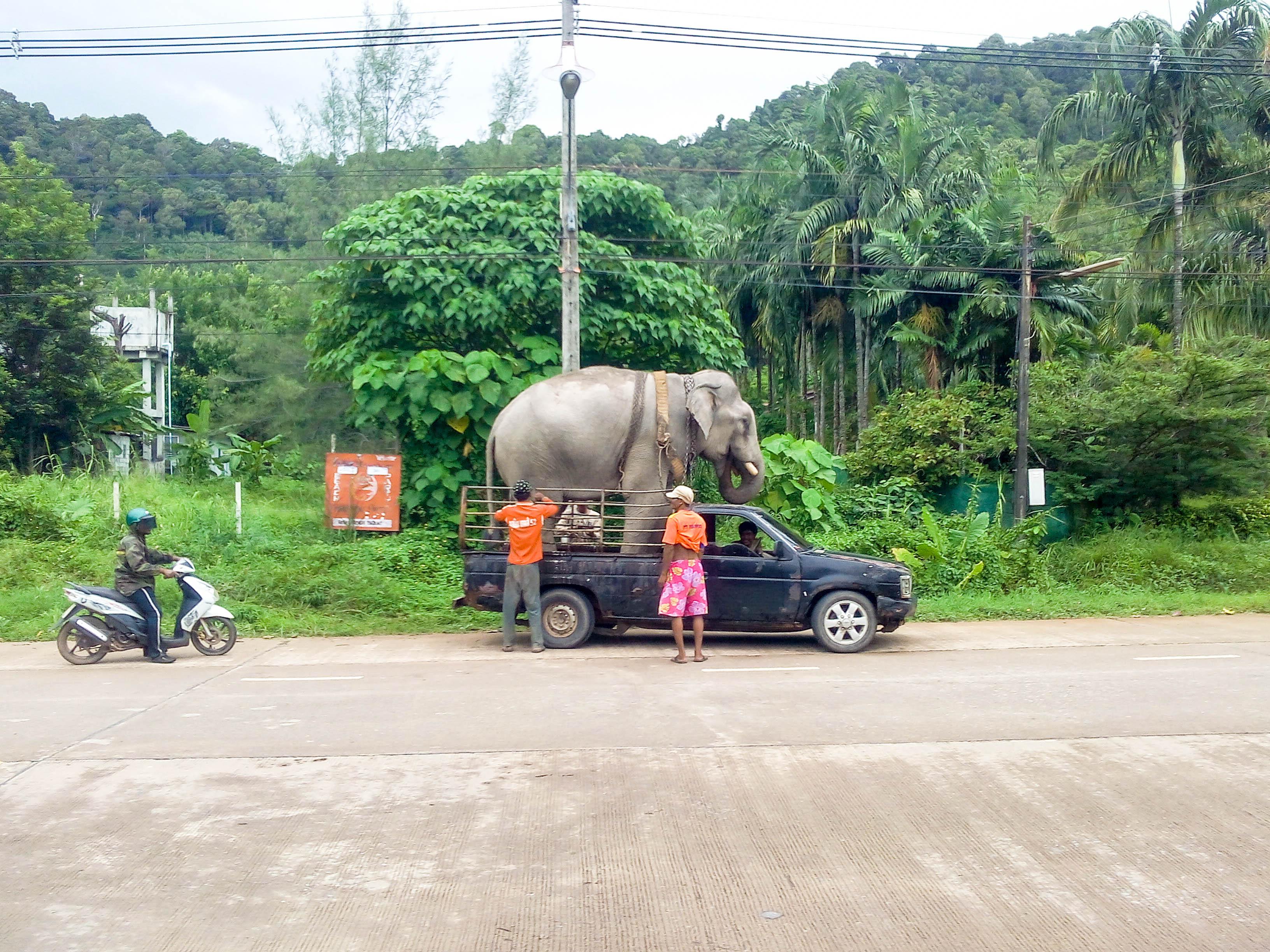éléphant à Koh Lanta, Thaïlande